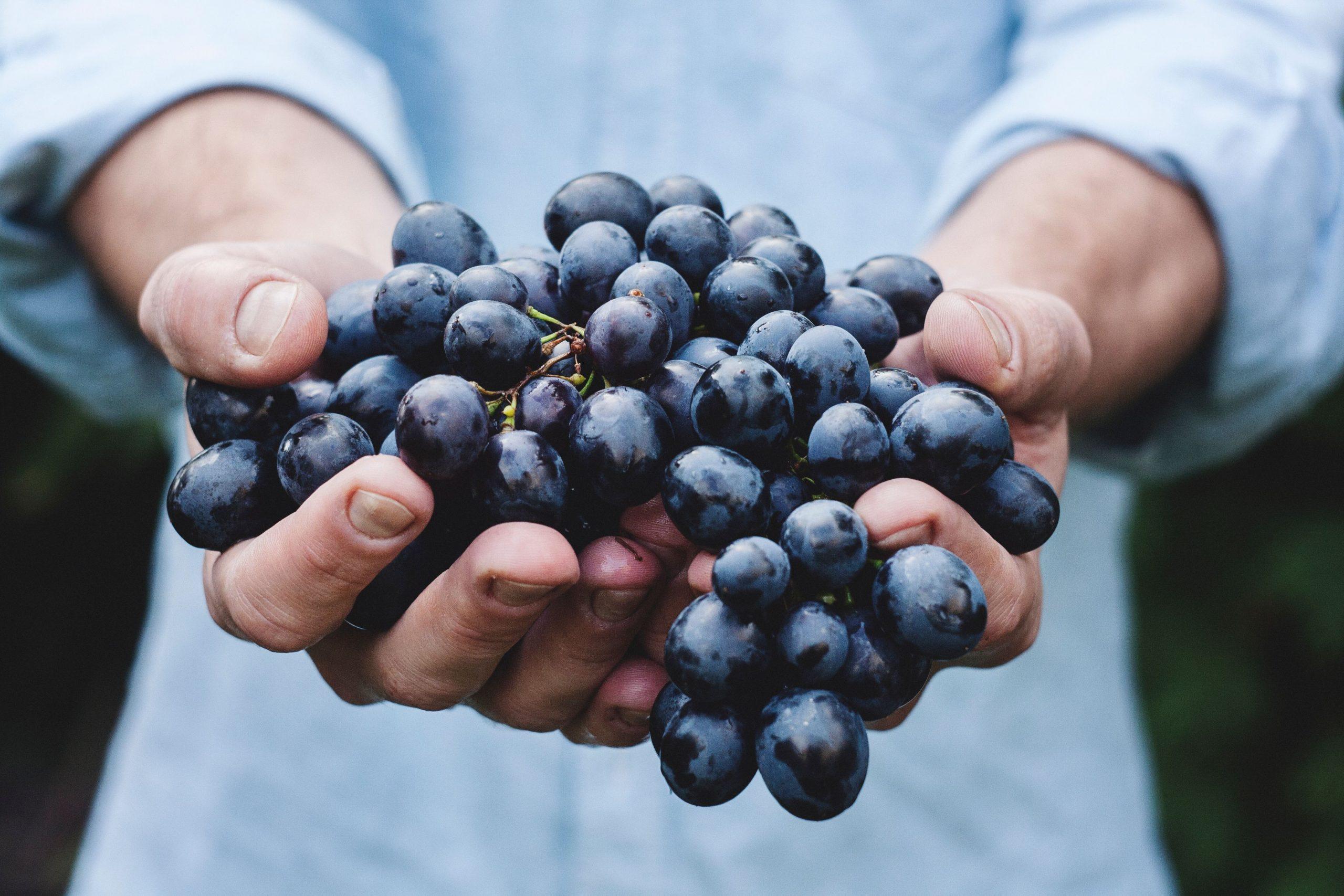 Grapes, Etna Wine