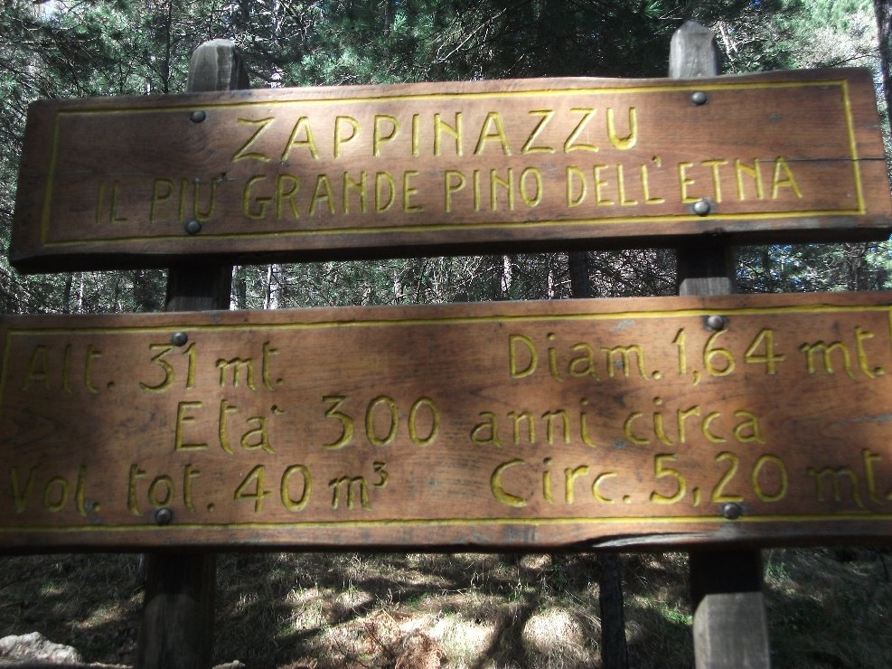 Nameplate of Zappinazzu with its informations