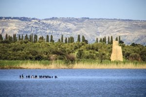 Vendicari Birdwatching e Trekking @ Riserva naturale di Vendicari
